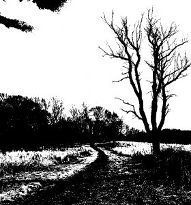 bw-image-tree