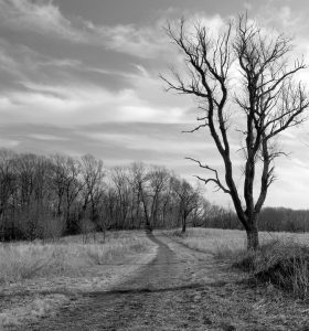 tree-pciture-grayscale